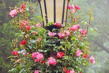 Сад цветы