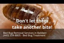 Bed Bug Removal Services in Baldwin MD (443) 354-8805 - Bed Bug Treatment