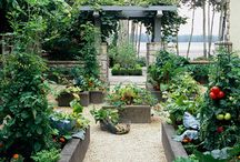 Garden - raised beds and vegetables