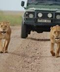 3 Days Samburu Lodge Safari trip