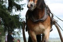 Häst tankar