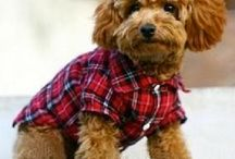 Pets with Style / Pets that we could take some tips from