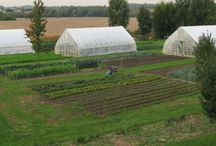 Greenhouses/Cold Frames / by Dawn Collyott