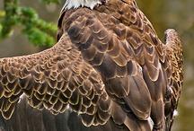 aves.pajaros  / by Delfina Fiad