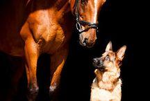 Pferd Hund beides:)