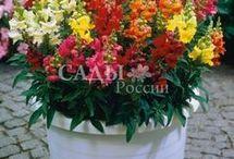 цветы для контейнеров