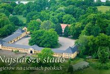 Okolice / Sierakowski Park Krajobrazowy, Piękna Polska, Kraina 100 Jezior / by OLANDIA