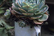 Jardim / Plantas e decoração