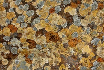 Lichen,Fungi,Mosses etc