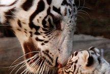 Animais que não são animais