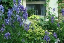 garden / Few ideas
