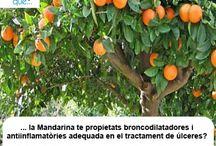 Mandarina / Mandarina / Aquí trobaràs curiositats sobre la mandarina  / Aquí encontrarás curiosidades sobre la mandarina