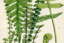 herbarium og flora illustrasjoner