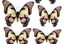 Картинки-бабочки