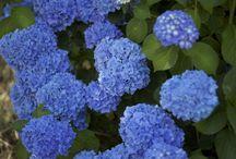 flower fettish