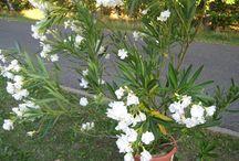 Pflanzen und Garten