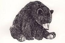 *BEAR*