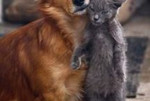Mr. DOG  &   Miss Cat