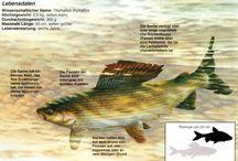 Fischarten
