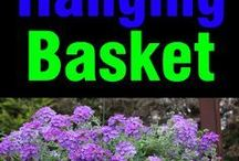 hanging baskets and plants