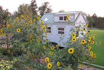 Tiny Home Life / Scenic shots of our own tiny homes and others. What tiny living is all about!