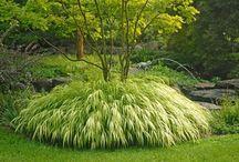 PLANTS / Less seen plant varieties of merit.