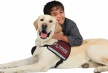Hearing dogs... / And other countries....