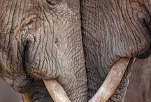 Elephant's❤ I love them