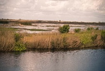 Louisiana Landscape