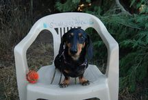 Seattle Dog Parks for Small Dogs / by Evening Magazine's Best of Western Washington