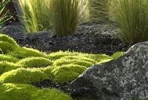 ogród mazi