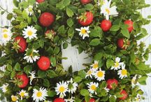 Blommarrangemang