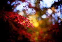 Autumn photos to play