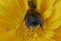 FLOWER POLLINATION / flower pollination pollinering av blommor kukkien pölytys