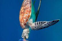 Animals: Sea Turtles / by Adam Lang