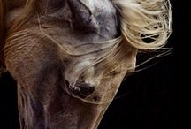 beautifull horses