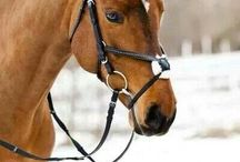 Horse Aesthetics