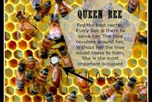 All about Bees