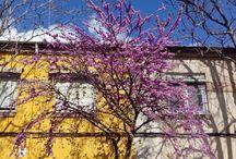 Primavera en Zaragoza