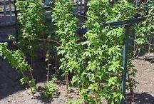 ogród uprawy