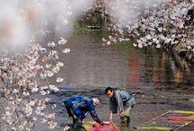 Japon / littérature, peinture, villes, cinéma
