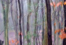 Tranquil trees / Giclee print