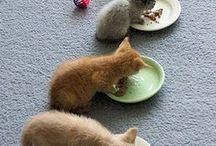 Cats stuff.