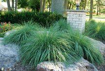 Our Work:  Grasses / Ornamental & Native Grasses in the Landscape