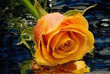 FLOWERS- ΛΟΥΛΟΥΔΙΑ