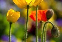 Plantas, Jardines y siembra. / by Catherine Sangil Bacco