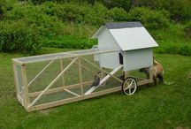 Chicken Tractor Ideas / by Paula M