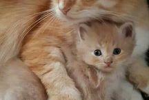 Kočka / Neomezeně stahuj. Pull off.