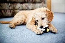 Hund / Dogs