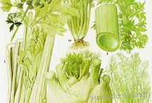 Gemüse Garten Skizzen